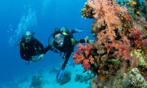 cococay-scuba-dive-adventure-ZC04-mosaic